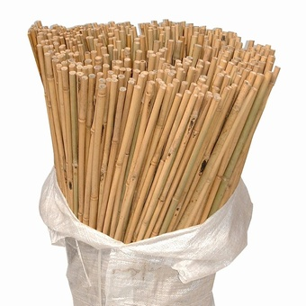 Bamboo Canes 4'   18/20  lbs Canes > Bamboo