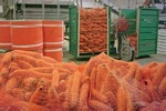 Produce Nets46x59cm Red      (beet / swede)
